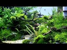 Aqua Designs Inc Aquascape Quot Naturalman Aquarium Design Quot 2014 Youtube