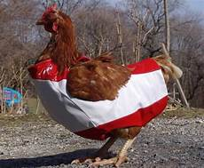 chicken clothes chicken clothing golberz