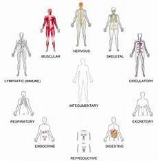 11 Body Systems Thirikadugam கட க ரம ம உடல உற ப ப பண கள ம