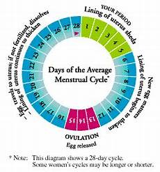 24 Day Menstrual Cycle Chart Working Out Amp Your Period Beautiful To The Core