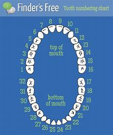 Dental Tooth Number Chart Dentists How Do Dentists Number Teeth
