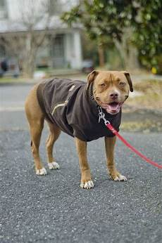 cool coats for dogs wood cool diy pet projects for your or cat