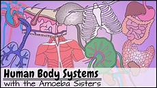 11 Body Systems Human Body Systems Functions Overview The 11 Champions
