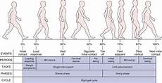 Gait Cycle Assessment Of Gait Musculoskeletal Key