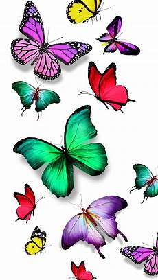 Butterfly Wallpaper For Iphone 6 Plus by Colorful Butterfly Nexus 6 Wallpapers Nexus 6 Wallpapers