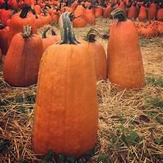 Skinny Pumpkin Designs Fall Dirt Simple Part 6