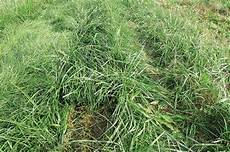 Fescue Hay Alfalfa And Fescue What You Should Expect From Them