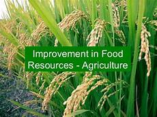 Food Resources Improvement In Food