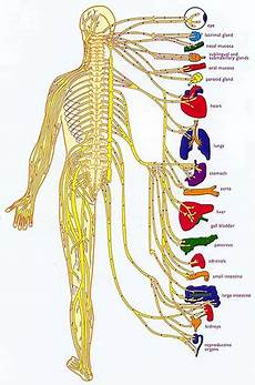 Chart Of Nerves In Back Chiropractor Cranston Richiropractic Charts Amp Diagrams