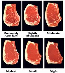 Steak Grade Chart A Lesson In Steak Intro And Grading Part 1 187 The Mind Of Dh