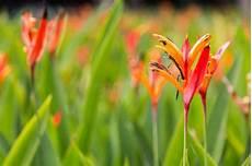 fiore uccelli paradiso uccelli tropicali dei fiori di paradiso immagine stock