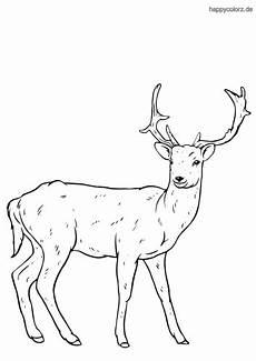 Ausmalbilder Tiere Rehe Malvorlagen Hirsch Und Reh