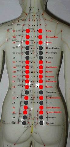 Spinal Pressure Points Chart New Acquisition In Back Shu Points Anatomy Knowledge
