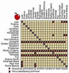 Apple Tree Pollination Chart Apple Pollination