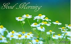 Flower Wallpaper Morning Hd by Morning Wallpaper 15 Hd Images