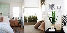 piante per da letto piante da interno chiara naseddu architecture interior