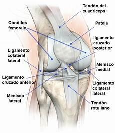 dolore parte interna ginocchio sinistro lesi 243 n menisco de la rodilla interno o externo cirug 237 a