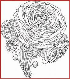 Ausmalbilder Blumen Schwer Schwere Ausmalbilder Blumen Rooms Project