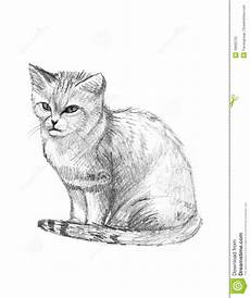 Cat Drawing Images Sand Cat Drawing Sketch Stock Illustration Illustration