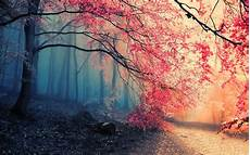 Hd Background Images 1783 Forest Hd Wallpapers Background Images Wallpaper