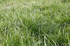 Fescue Hay Don T Miss This Fescue Opportunity Hay And Forage Magazine
