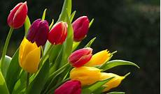 Flower Wallpaper Pictures by 50 Beautiful Flower Wallpaper Images For