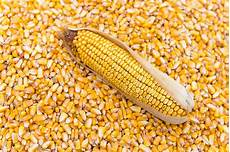 What Is Corn Made Of Corn Gluten U S Grains Council