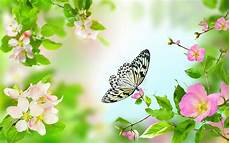 live flower wallpaper for desktop gentle flowers live wallpaper android apps on play