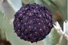 fiori a palla viola tentativi digitali una palla di fiori