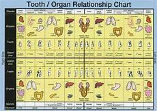 Tooth And Organ Relationship Chart Every Organ And