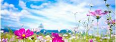 flower wallpaper for desktop free summer flower screensavers wallpapers desktop background