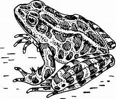 Frosch Malvorlagen Lyrics Frosch Malvorlagen 123 Ausmalbilder