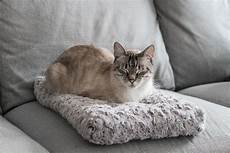 the best cat beds according to our cats reviews by