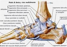 interno caviglia la distorsione alla caviglia una guida passo passo