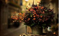 Autumn Flower Wallpaper Hd by Pin On Autumnal