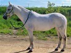 Healthy Horse Weight Chart Royal Grove Stables Blog How To Know If Your Horse Too