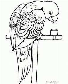 Vogel Malvorlagen Terbaik Vogel Malvorlagen Terbaik