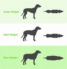 Ideal Weight For Dogs Weight Chart How To Tell If Your Dog Is A Healthy Weight