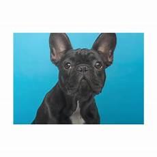 bulldog puppy 3 months headshot blue