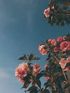Aesthetic Flower Wallpaper Iphone by Aesthetic Flowers Wallpapers Top Free Aesthetic