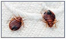 bed bugs services in delhi ncr pest for