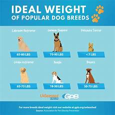 Ideal Weight For Dogs Weight Chart Fat Shaming Your Dog Georgia Public Broadcasting