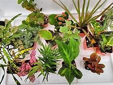 Best Plants For Low Light Terrarium 15 Best Plants For Terrarium Easy To Grow Terrarium Plants