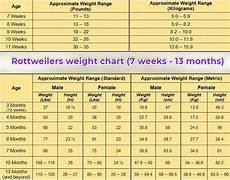 Rottweiler Growth Chart Rottweiler Growth Stages And Puppy Development Chart