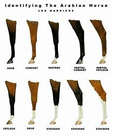 Leg Markings Level 1 Amp 2 Horse Markings Horse