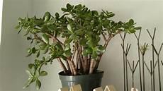 Low Light Succulents 8 Great Low Light House Plants The Zen Succulent