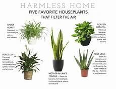 Low Light Pet Safe Indoor Plants Indoor Plants Non Toxic To Pets