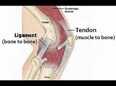 Knees Ligaments And Tendons Strengthen Ligaments Tendons For Bjj Youtube