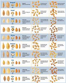 Almond Variety Chart Etymology Meaning Of Nonpareil Related To Savory