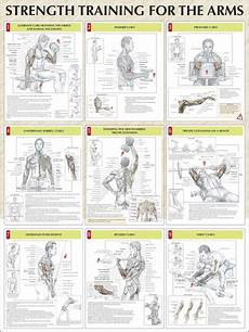 Weight Lifting Exercise Chart Weight Lifting Exercises For Arms